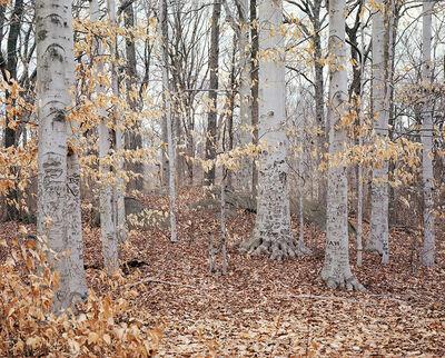 Caleb Churchill, 'Thain Forest', 2016