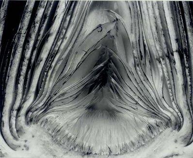 Edward Weston, 'Artichoke, Halved', 1930