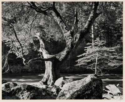 Ansel Adams, 'Morning, Merced River Canyon', 1950-printed later