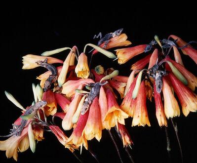Nobuyoshi Araki, 'Untitled, from the series »Flowers and Jamorinsky«', 2005-2006