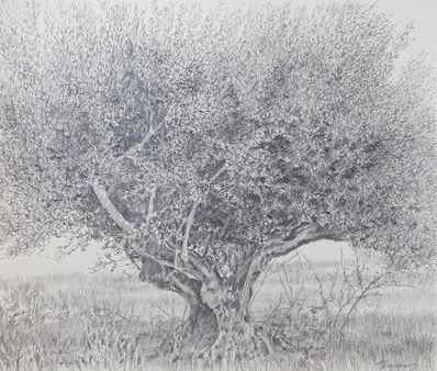 George Tzannes, 'Olive Tree', 2007