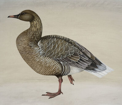 Harriet Bane, 'Pink Footed Goose'