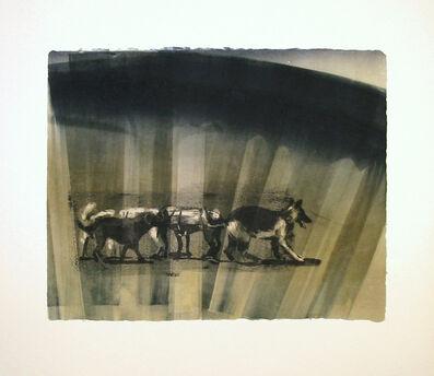Joel Janowitz, 'Pack XII/XIV', 2005