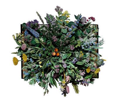 Kerry Miller, 'WILD FLOWERS OF GREAT BRITAIN: volume X', 2016