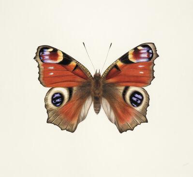 Jennifer Hooper, 'Peacock Butterfly '