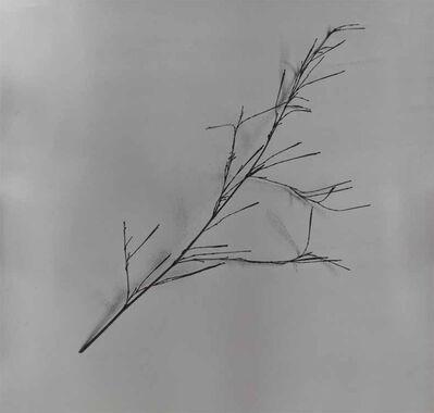 Chu Chu  儲楚, 'Whispers of Trees-Bamboo', 2011-2017
