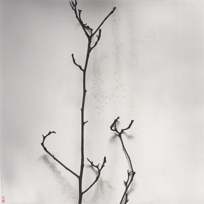 Chu Chu  儲楚, '樹語 - 玉蘭 - 果殼中的宇宙', 2010-2017