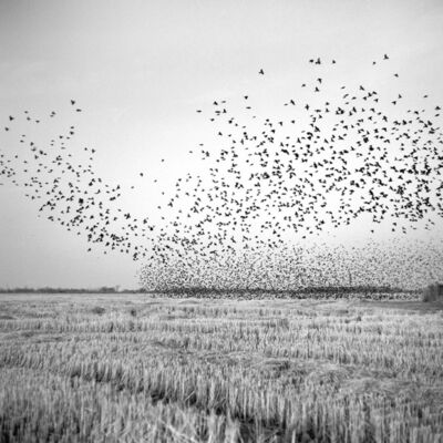 Brandon Thibodeaux, 'Birds in Field, Mound Bayou, Mississippi', 2012