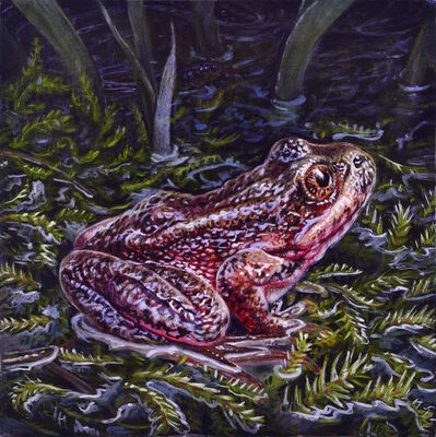 Eric Wert, 'Red Legged Frog', 2016
