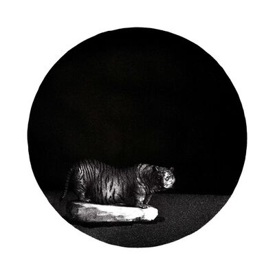 Wang Changgan, 'Big Tiger', 2015