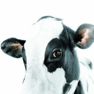 Mauricio Velez, 'Cow #3', 2000