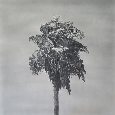 Clay Wagstaff, 'Palms no. 11', 2016