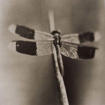David Johndrow, 'Dragonfly No. 4', 2004