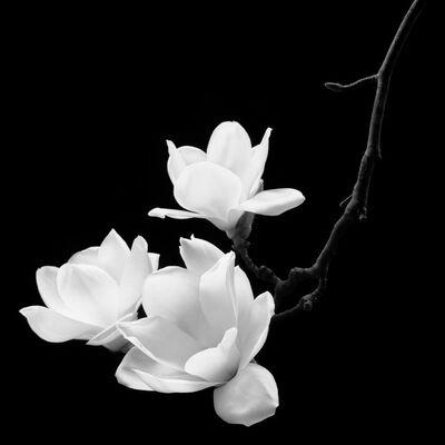 Kim Byung Hoon, 'Magnolia Kobus - Real Flower 002', 2015