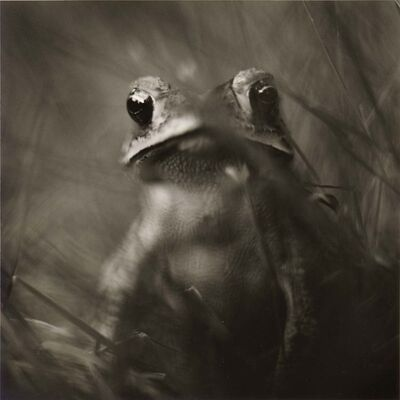 David Johndrow, 'Toad', 2004