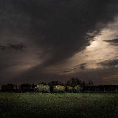 Kevin Boyle, 'Buffalo Under Moonlight', 2017