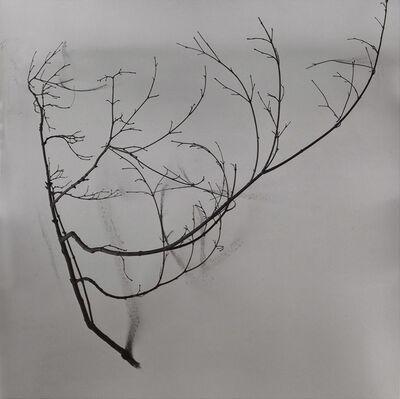 Chu Chu  儲楚, 'Whispers of Trees-Tea', 2011-2017