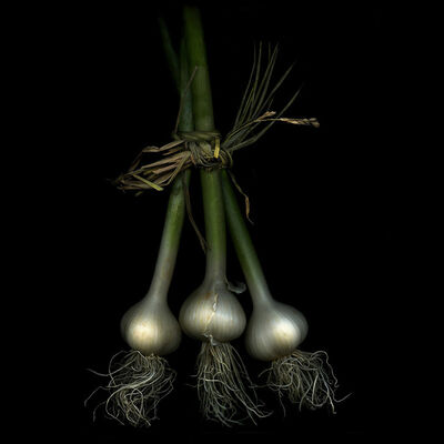 Jerry Freedner, 'Three Garlic (Still Life)'