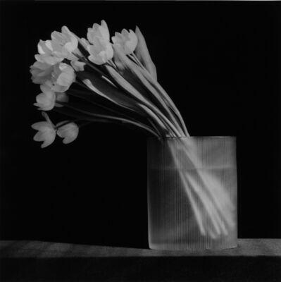 Robert Mapplethorpe, 'Tulip', 1986