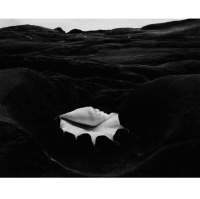 Edward Weston, 'Shell & Rock Arrangement ~ 15S', 1931