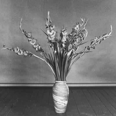 Robert Mapplethorpe, 'Gladioli', 1979