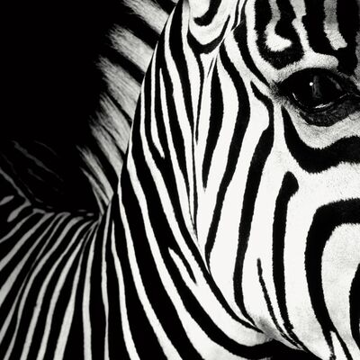 Mauricio Velez, 'Half Angels Half Demons - Zebra, #26 B&W Photograph ', 2008