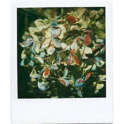 Nobuyoshi Araki, 'Still Life'