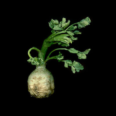 Jerry Freedner, 'Celeriac 116', 2012-2013
