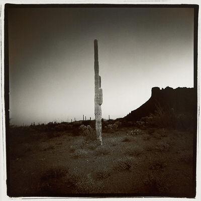 Richard Misrach, 'Saguaro #7, Arizona, from the Saguaro Suite', 1975