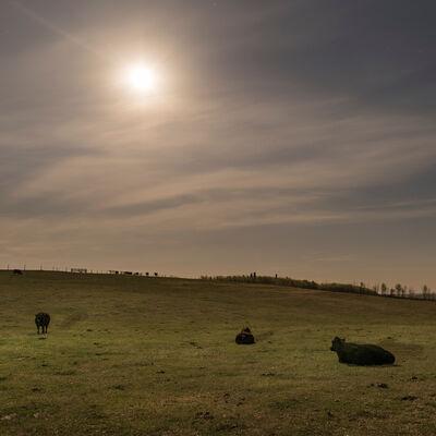 Kevin Boyle, 'Calving Cows Under Moonlight', 2017