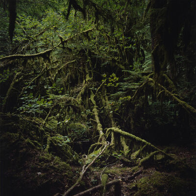 Jason Frank Rothenberg, 'Moss', 2007