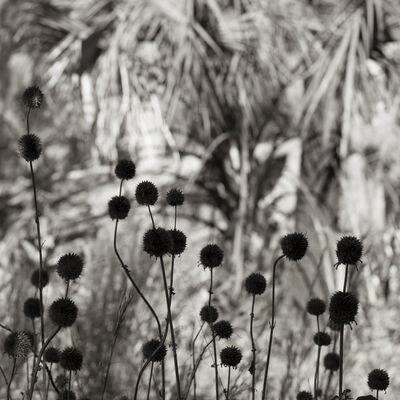 Sal Taylor Kydd, 'Botanicals', 2017