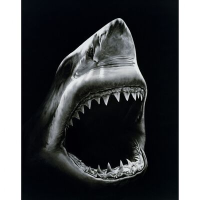 Robert Longo, 'Shark 5', 2008-2011