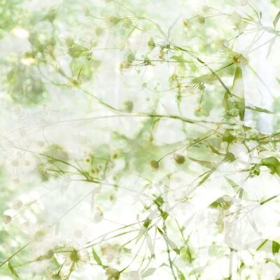 Elizabeth Chiles, 'Roadside Daisies', 2014