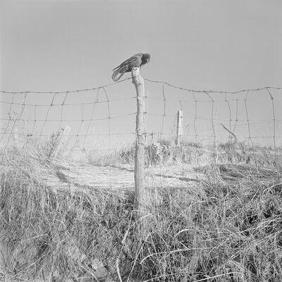 Jin Zhang, 'Waking from Hibernation', 2010
