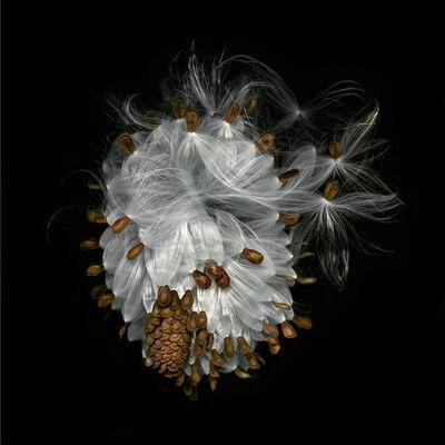 Jerry Freedner, 'Milkweed'