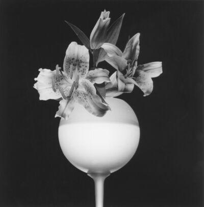 Robert Mapplethorpe, 'Tiger Lily', 1987
