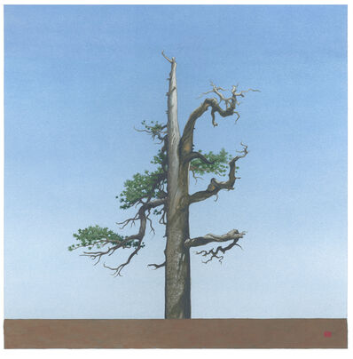 Greg Rose, 'Throop Tree [N34*21.178+w117*47.957', 2013
