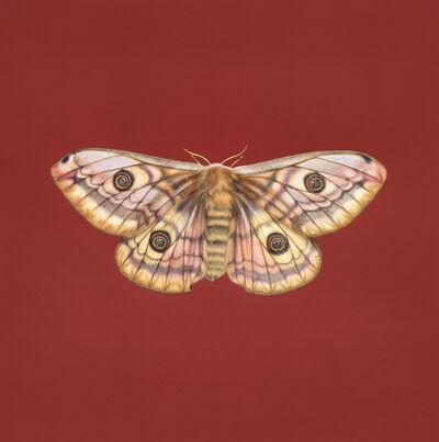 Jennifer Hooper, 'Emperor Moth'