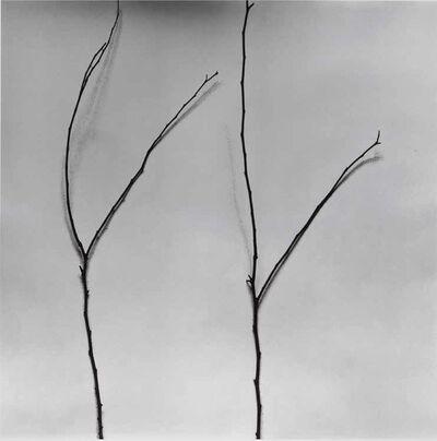 Chu Chu  儲楚, 'Whispers of Trees-Cercis', 2011-2017