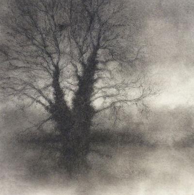 Sue Bryan, 'Winter Tree 4', 2017