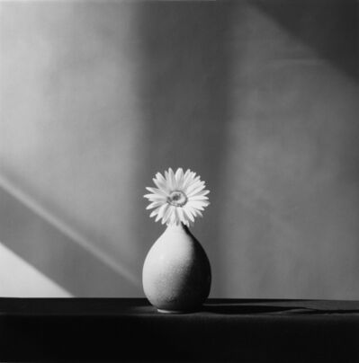 Robert Mapplethorpe, 'African Daisy', 1982
