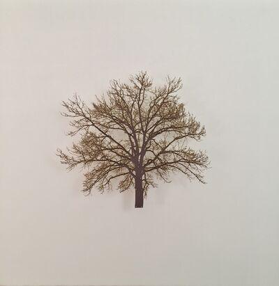 Emma Levine, 'Oak Tree 6', 2015