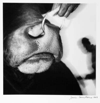 Xavier Lambours, 'Untitled', 1988