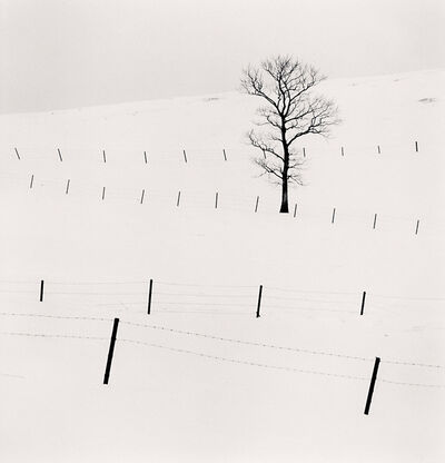 Michael Kenna, 'Tree and Twenty Eight Posts, Teshikaga, Hokkaido, Japan', 2013
