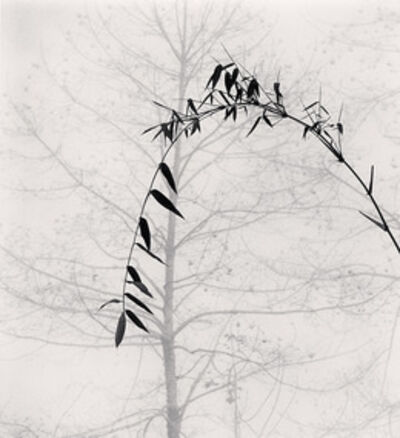 Michael Kenna, 'Bamboo and Tree, Qingkou Village, Yunnan, China', 2013