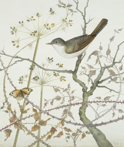 Harriet Bane, 'Whitethroat and Meadow Brown'