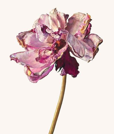 Rosie Sanders, 'The last rose'