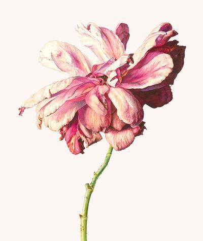 Rosie Sanders, 'Rosy-fingered Dawn'