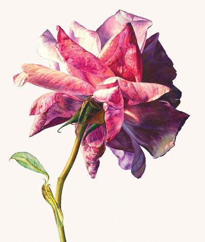 Rosie Sanders, 'Sue's rose'